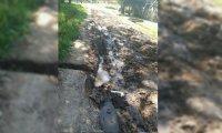 Reclamo por el mal estado de una calle en Manzone