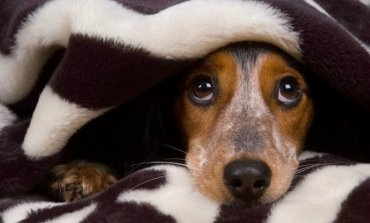 Pirotecnia: El Colegio de Veterinarios bonaerense brinda consejos para cuidar a las mascotas