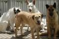 Un refugio de animales organiza un evento para recaudar fondos
